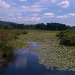 Burnaby Lake - © Gillian Knox - GillianKnox.com