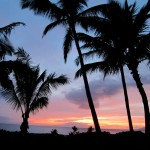Hawaiian palm trees - © Gillian Knox - GillianKnox.com