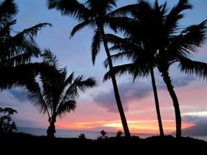 Hawaiian palm trees - © Gillian Knox - GillianKnox.com